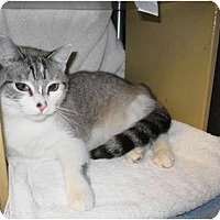 Adopt A Pet :: Mimi - Warminster, PA