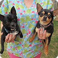 Adopt A Pet :: Cyclops and Alexis - Kingwood, TX