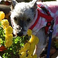 Adopt A Pet :: Nadja - Cleveland, OH