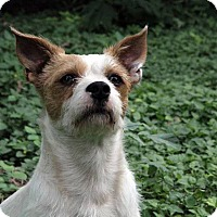 Adopt A Pet :: Tyrion - Austin, TX