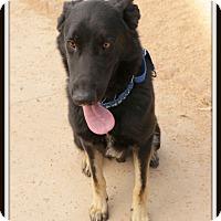 Adopt A Pet :: Polo - Phoenix, AZ