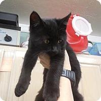 Adopt A Pet :: Ozzie - Morgan Hill, CA