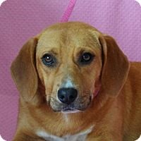 Adopt A Pet :: **JUBILEE** MEET APRIL 30TH! - Mukwonago, WI