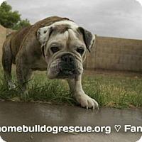 Adopt A Pet :: Louie - Tempe, AZ