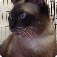 Adopt A Pet :: Hailey - Titusville, FL