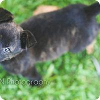Adopt A Pet :: Baby Athena - Miami, FL