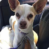 Adopt A Pet :: Mimi - Manhattan Beach, CA