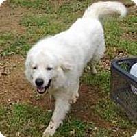 Adopt A Pet :: Kidd LGD - Kyle, TX