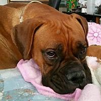 Adopt A Pet :: Adel - Las Vegas, NV
