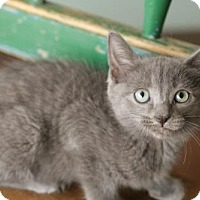 Adopt A Pet :: Breena - San Antonio, TX