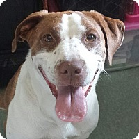 Adopt A Pet :: Miley - Williston, FL