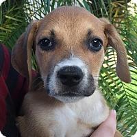 Adopt A Pet :: Grandview#2M - Orlando, FL