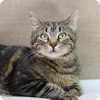 Adopt A Pet :: Mummas - $10! - Midland, MI