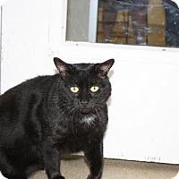 Adopt A Pet :: Seamus - Salem, MA