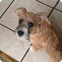 Adopt A Pet :: Jack - Livermore, CA