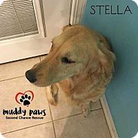 Adopt A Pet :: Stella - Adoption pending - Council Bluffs, IA