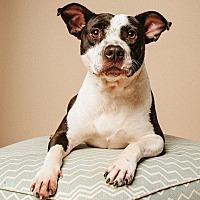 Adopt A Pet :: Dayna - sugar land, TX