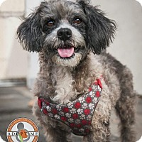 Adopt A Pet :: Harrison - Oceanside, CA