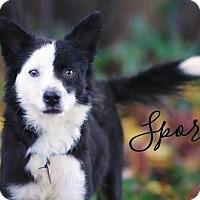 Adopt A Pet :: Sport - Joliet, IL