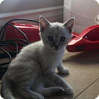 Adopt A Pet :: Rory - Orange, CA