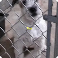 Adopt A Pet :: Tiny,Jack,Beauty - Palmdale, CA