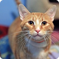 Adopt A Pet :: Slap Jack - Columbus, OH