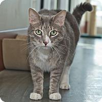 Adopt A Pet :: Boo Boo - Wilmington, DE