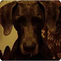 Adopt A Pet :: Maddie **ADOPTED** - Eustis, FL