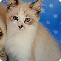 Adopt A Pet :: Pippin - Palmdale, CA