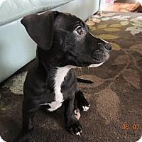 Adopt A Pet :: Ralph - Charlotte, NC