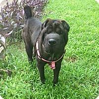 Adopt A Pet :: Mimi - Gainesville, FL