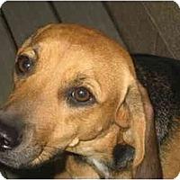 Adopt A Pet :: Abbe Jo - Phoenix, AZ