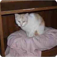 Adopt A Pet :: Angelica - Hamburg, NY