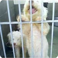 Adopt A Pet :: John and Wayne - Los Alamitos, CA