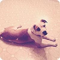 Adopt A Pet :: Mirah - Louisville, KY