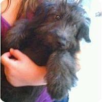 Adopt A Pet :: FL - Miley - Boca Raton, FL