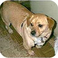 Adopt A Pet :: Biscuit - dewey, AZ