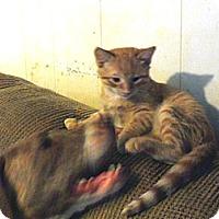 Adopt A Pet :: Reggie - Pensacola, FL