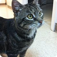 Adopt A Pet :: Orchard - Trevose, PA