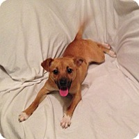 Adopt A Pet :: Molly B - Knoxville, TN
