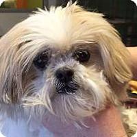 Adopt A Pet :: Isabella - LEXINGTON, KY