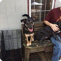 Adopt A Pet :: Teddy - Fair Oaks Ranch, TX