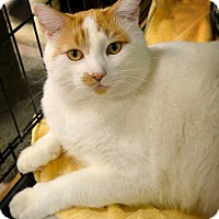 Adopt A Pet :: Charlie - Byron Center, MI