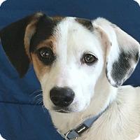 Adopt A Pet :: Koko - San Francisco, CA