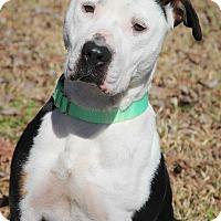Adopt A Pet :: Jazzy - Conyers, GA