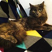Adopt A Pet :: Zigmund - Addison, IL