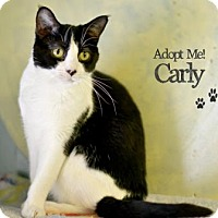 Adopt A Pet :: Carly - West Des Moines, IA