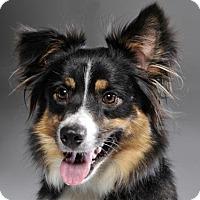 Adopt A Pet :: Karlie - ADOPTED! - Bedminster, NJ