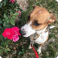 Adopt A Pet :: BG  (ETAA) - Allentown, PA