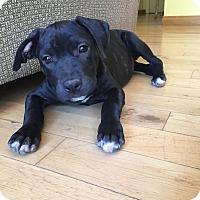 Adopt A Pet :: Susie Q - Santa Barbara, CA